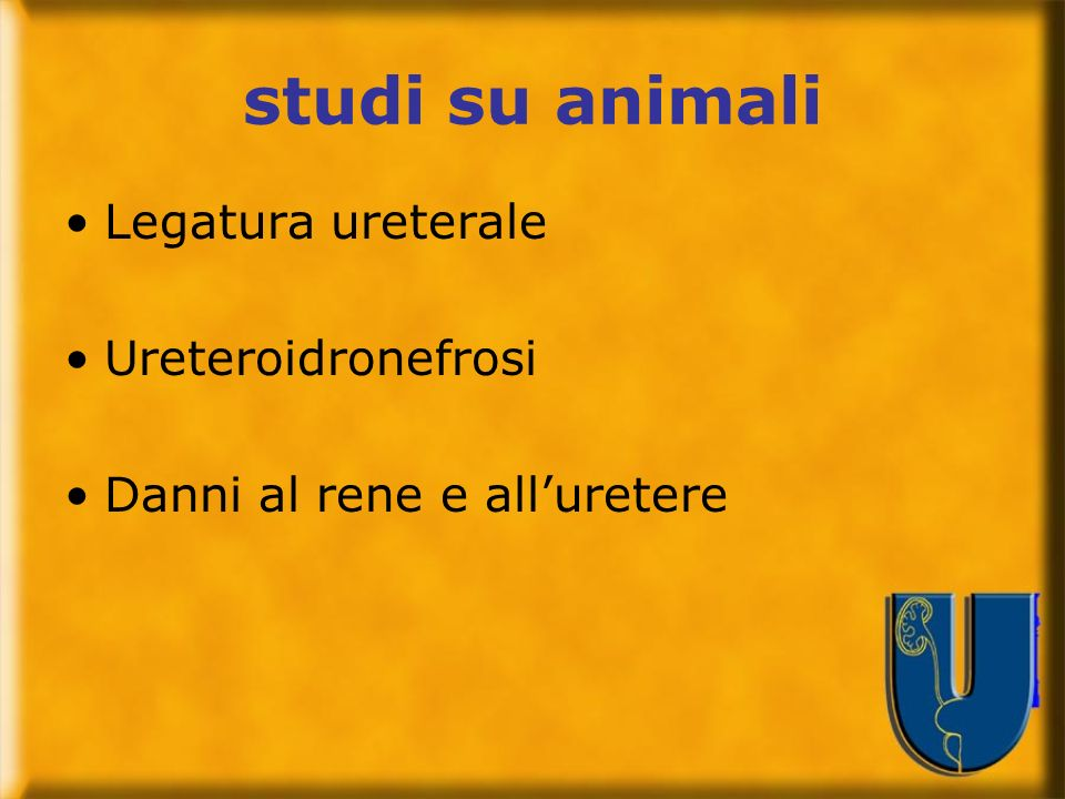 studi su animali Legatura ureterale Ureteroidronefrosi