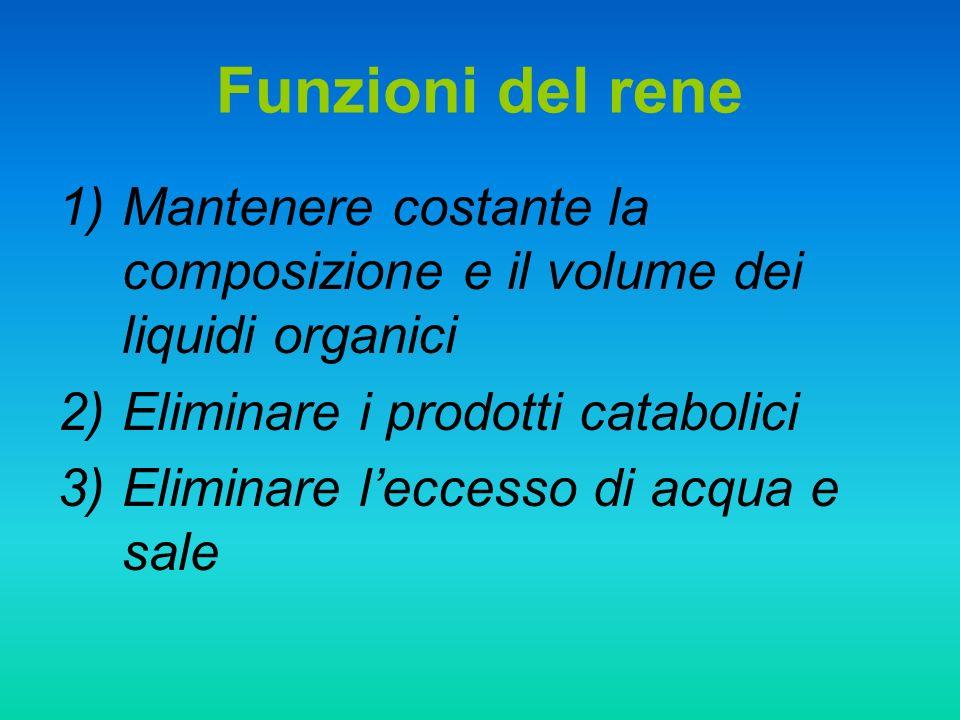 Funzioni del rene Mantenere costante la composizione e il volume dei liquidi organici. Eliminare i prodotti catabolici.