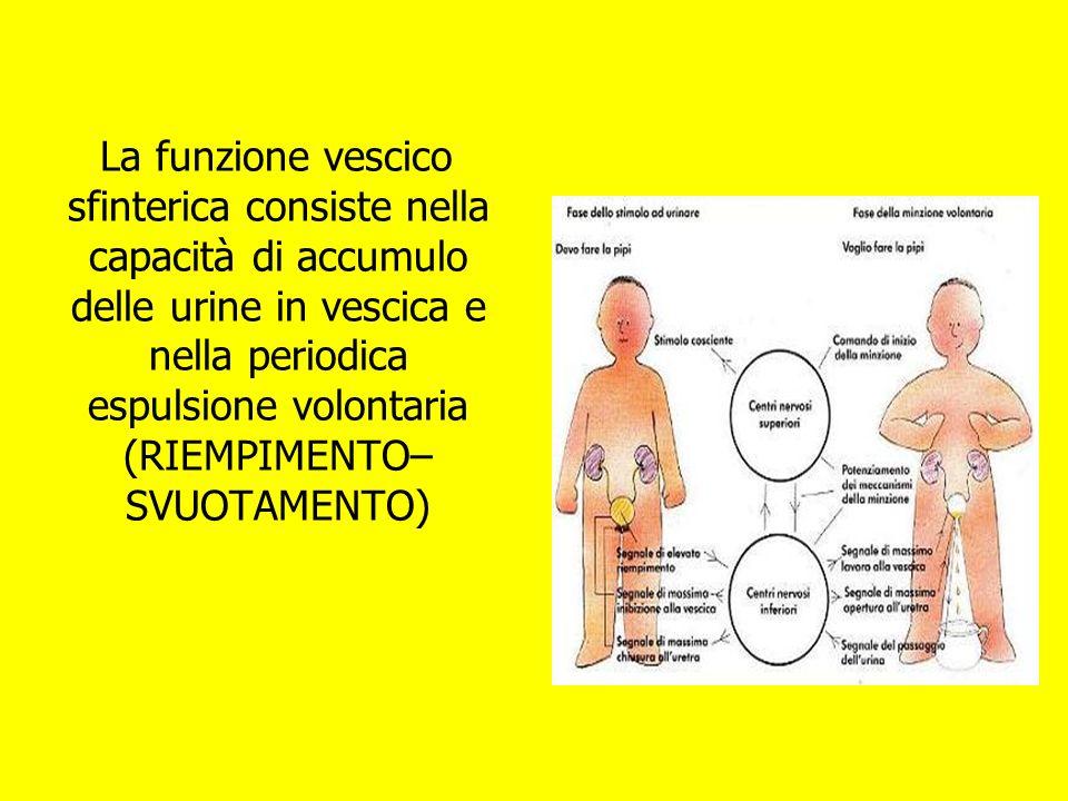 La funzione vescico sfinterica consiste nella capacità di accumulo delle urine in vescica e nella periodica espulsione volontaria (RIEMPIMENTO– SVUOTAMENTO)