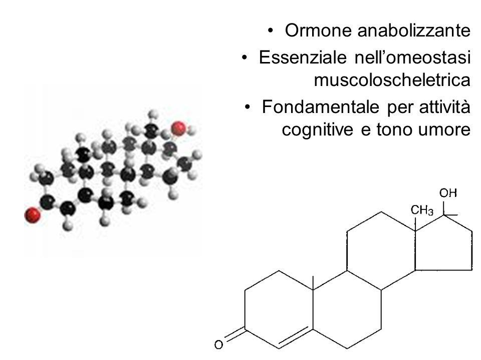 Ormone anabolizzante Essenziale nell'omeostasi muscoloscheletrica.