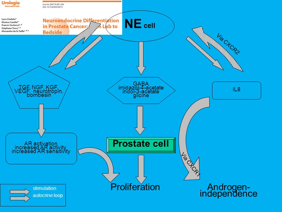 NE cell Prostate cell Proliferation Androgen-independence Via CXCR2
