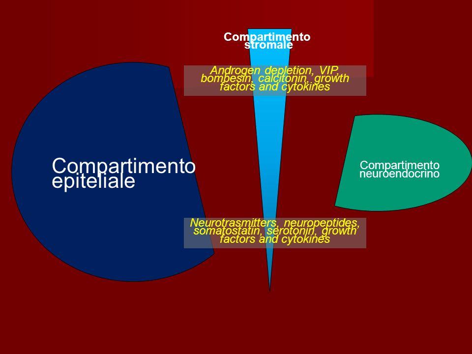 Compartimento epiteliale Compartimento stromale