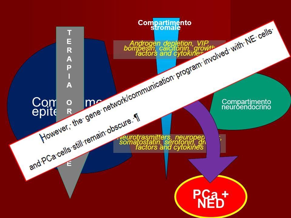 Compartimento epiteliale PCa + NED Compartimento stromale T E R A