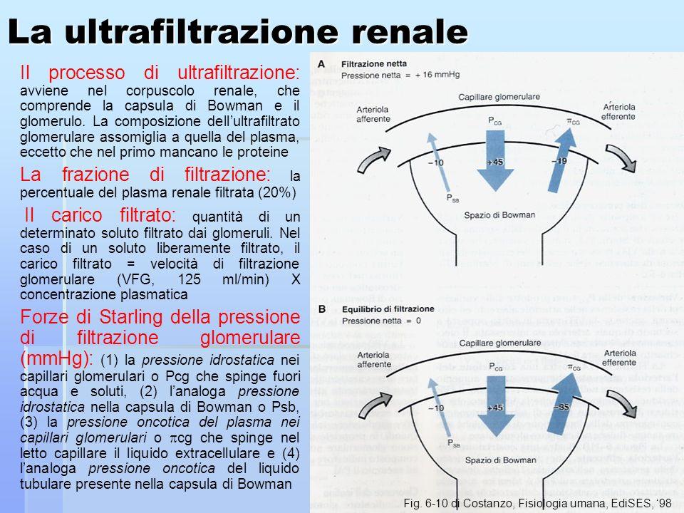 La ultrafiltrazione renale
