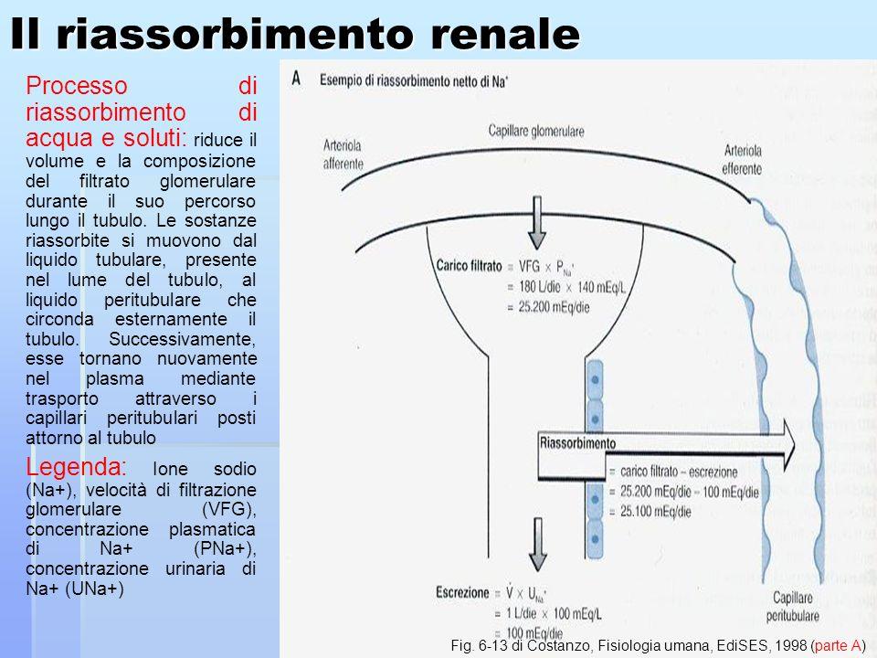 Il riassorbimento renale