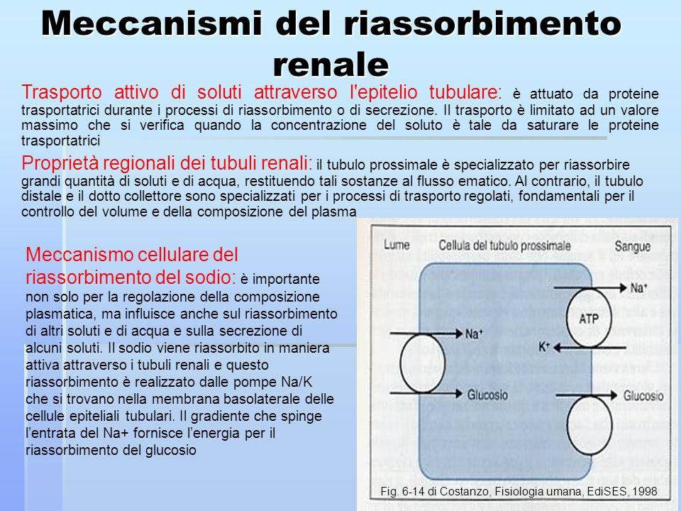 Meccanismi del riassorbimento renale