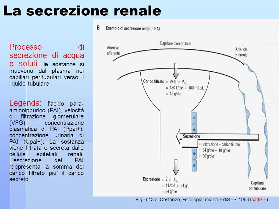 Fig. 6-13 di Costanzo, Fisiologia umana, EdiSES, 1998 (parte B)