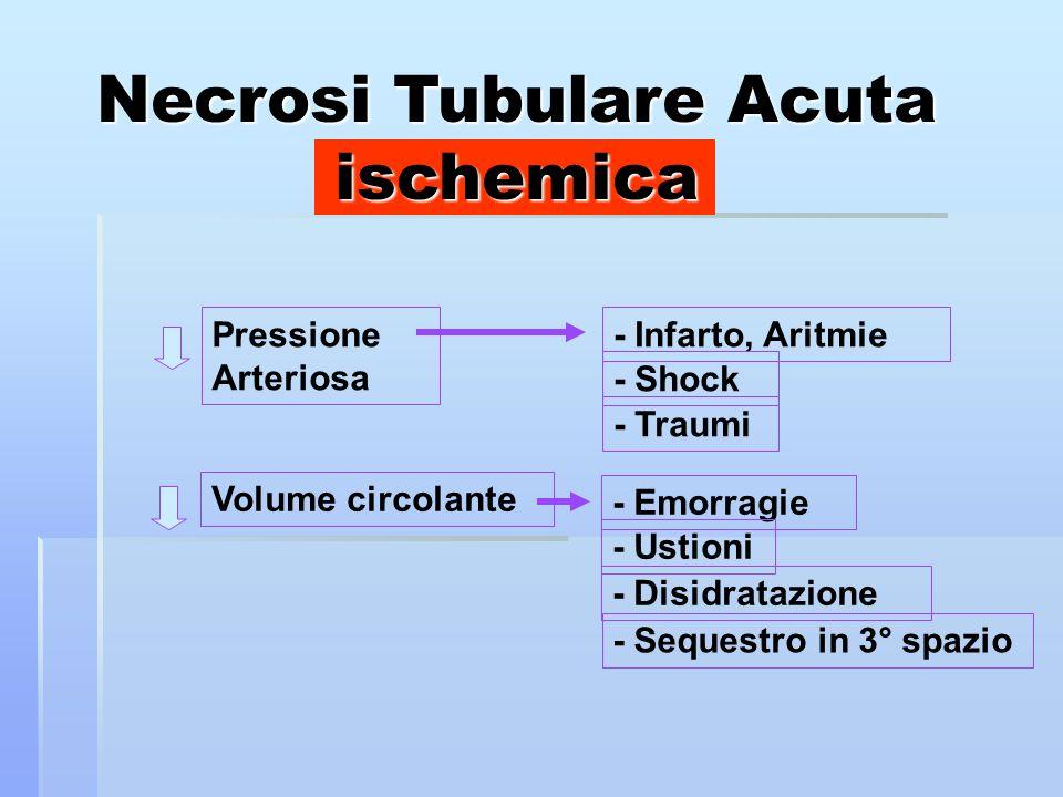Necrosi Tubulare Acuta ischemica