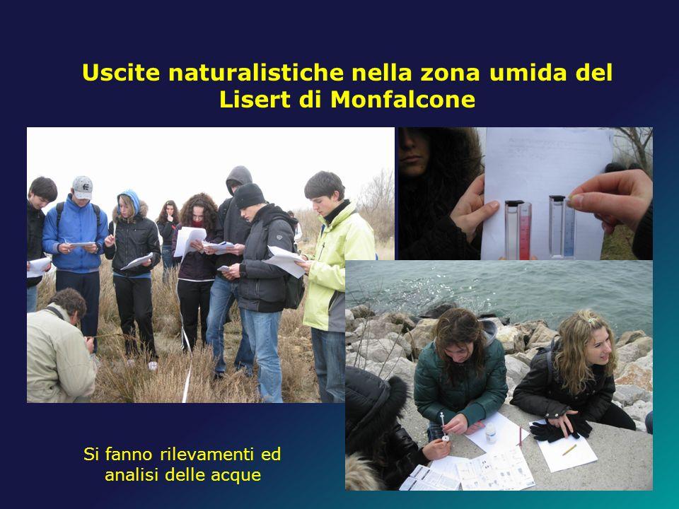 Uscite naturalistiche nella zona umida del Lisert di Monfalcone