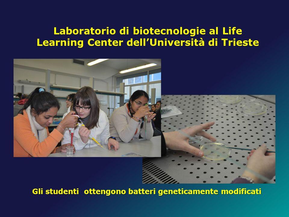 Gli studenti ottengono batteri geneticamente modificati