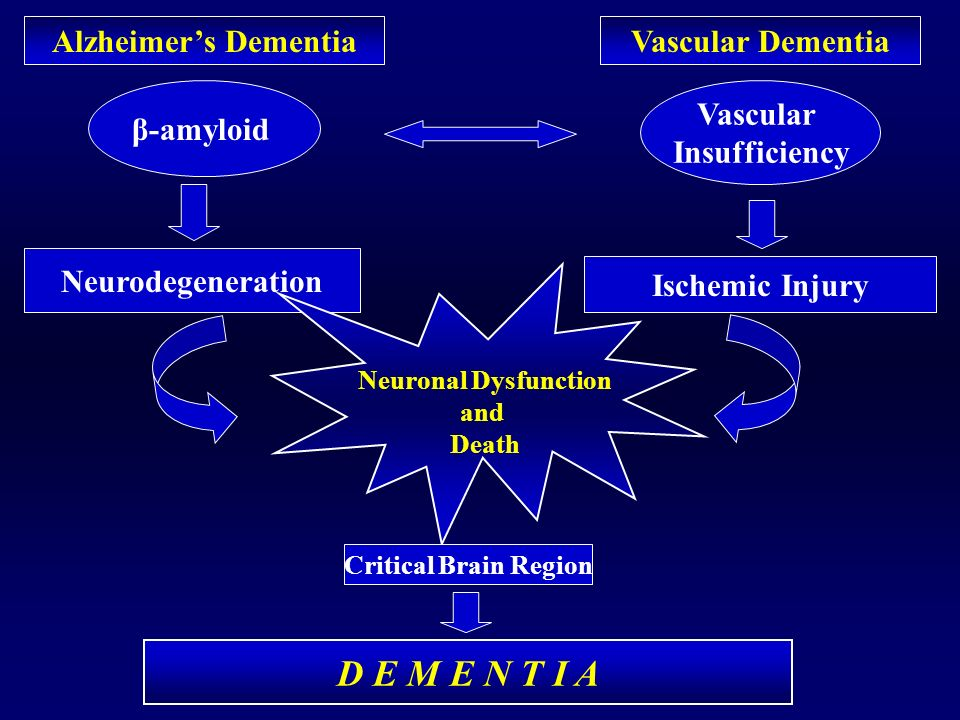 D E M E N T I A Alzheimer's Dementia Vascular Dementia β-amyloid