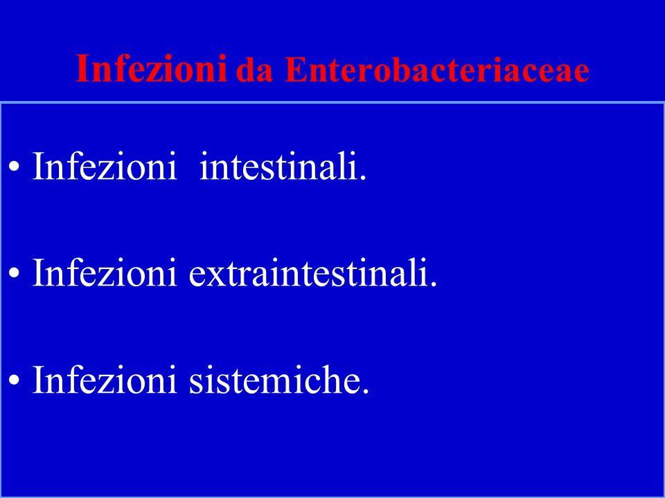 Infezioni da Enterobacteriaceae