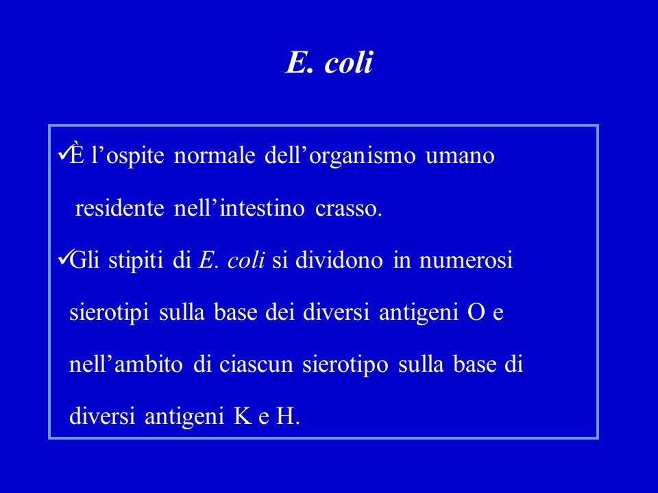 E. coli È l'ospite normale dell'organismo umano