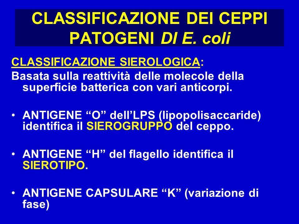 CLASSIFICAZIONE DEI CEPPI PATOGENI DI E. coli