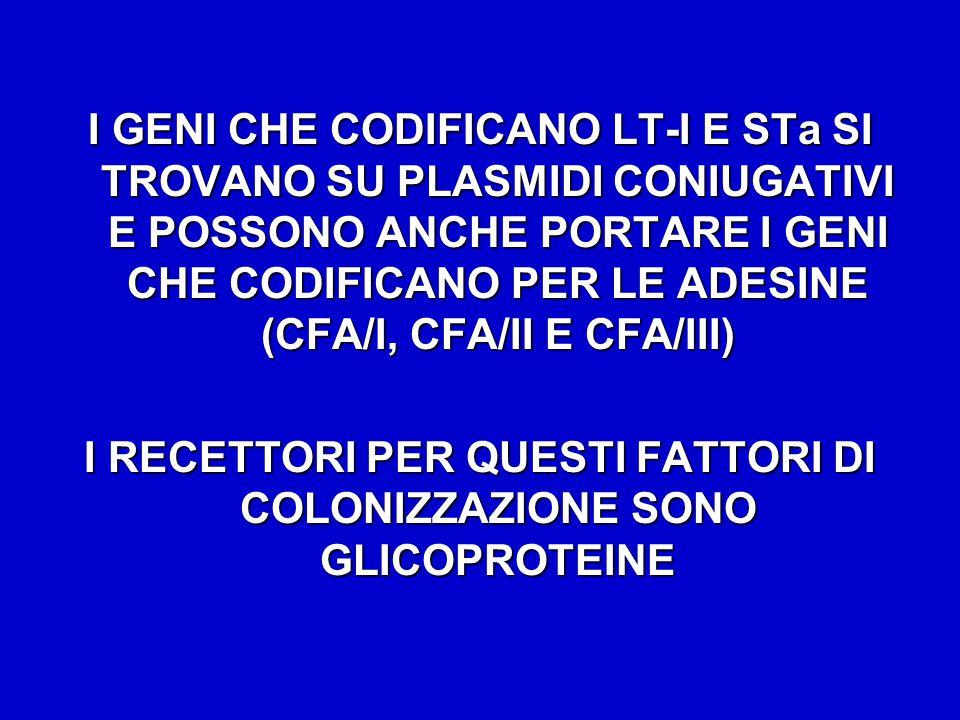 I RECETTORI PER QUESTI FATTORI DI COLONIZZAZIONE SONO GLICOPROTEINE