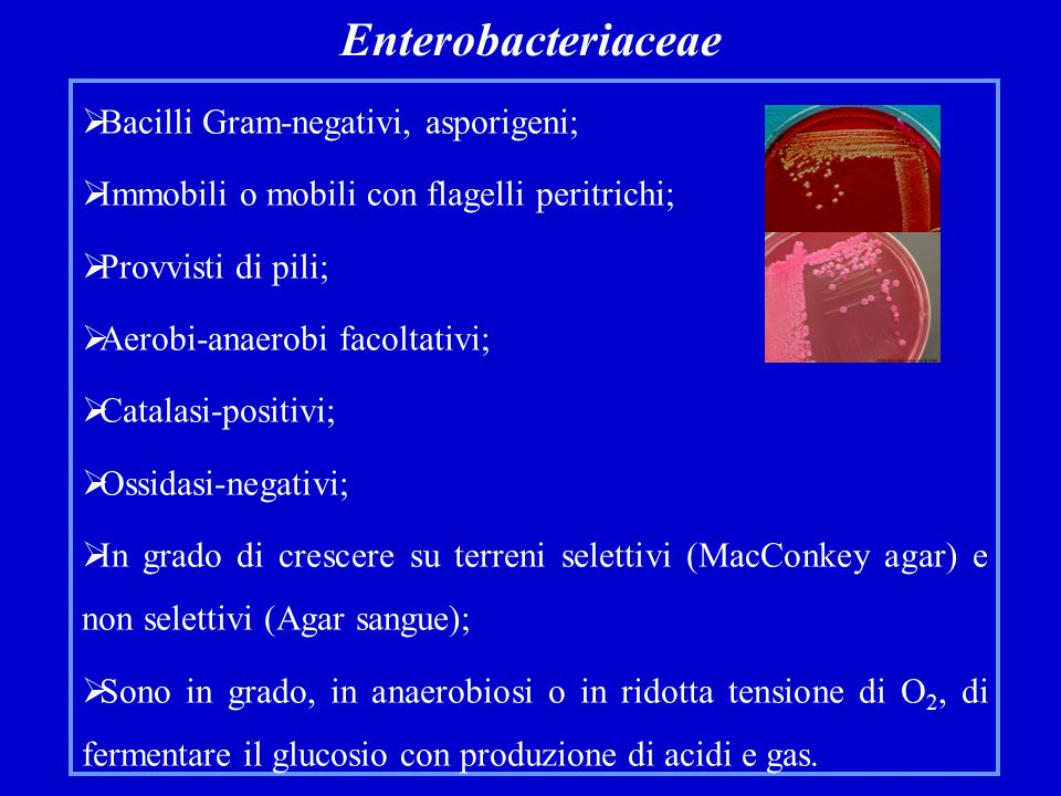 Enterobacteriaceae Bacilli Gram-negativi, asporigeni;