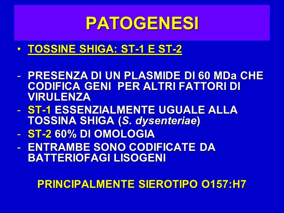 PRINCIPALMENTE SIEROTIPO O157:H7