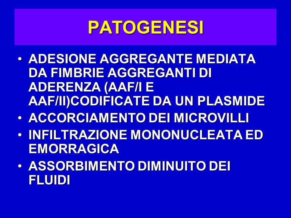 PATOGENESI ADESIONE AGGREGANTE MEDIATA DA FIMBRIE AGGREGANTI DI ADERENZA (AAF/I E AAF/II)CODIFICATE DA UN PLASMIDE.