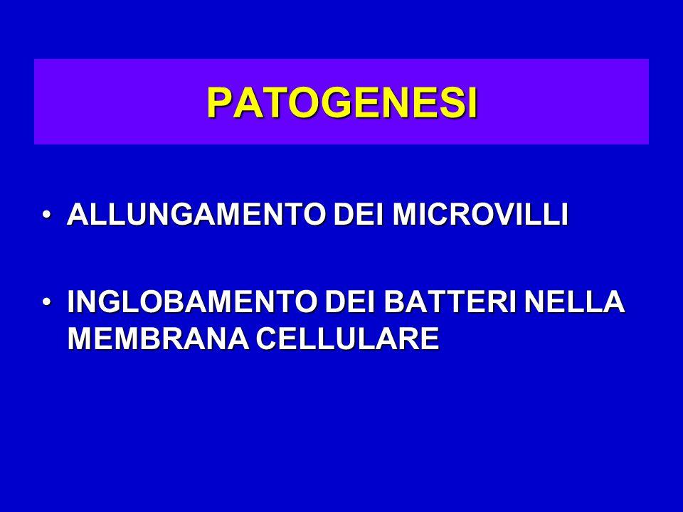 PATOGENESI ALLUNGAMENTO DEI MICROVILLI