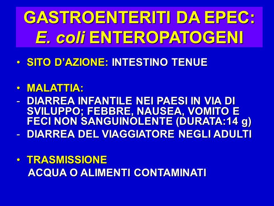 GASTROENTERITI DA EPEC: E. coli ENTEROPATOGENI