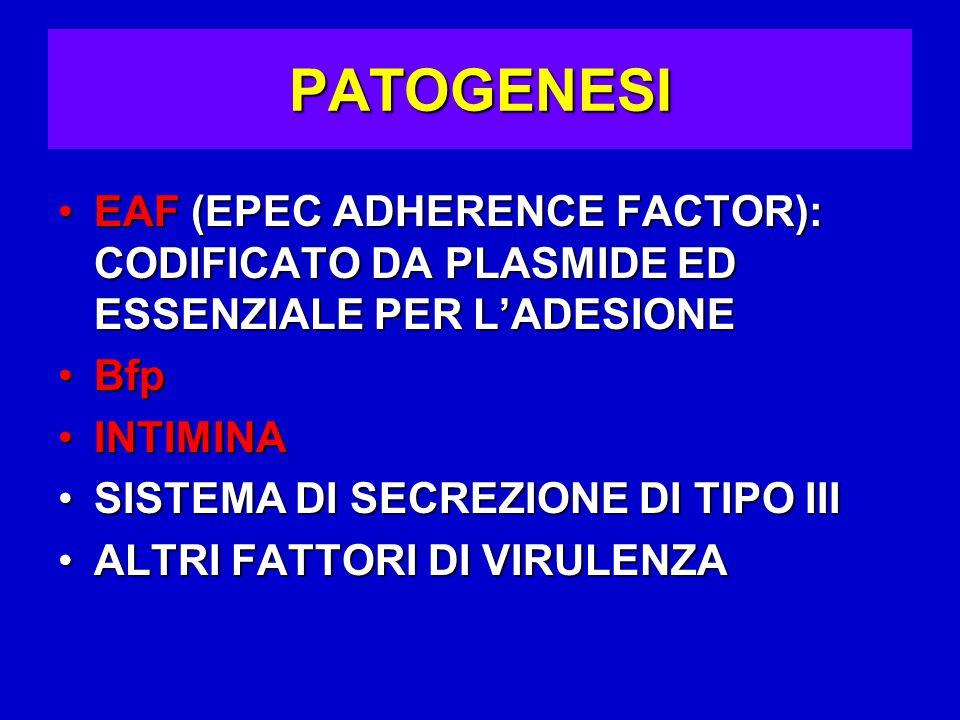 PATOGENESI EAF (EPEC ADHERENCE FACTOR): CODIFICATO DA PLASMIDE ED ESSENZIALE PER L'ADESIONE. Bfp. INTIMINA.