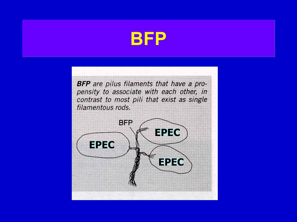 BFP EPEC EPEC EPEC