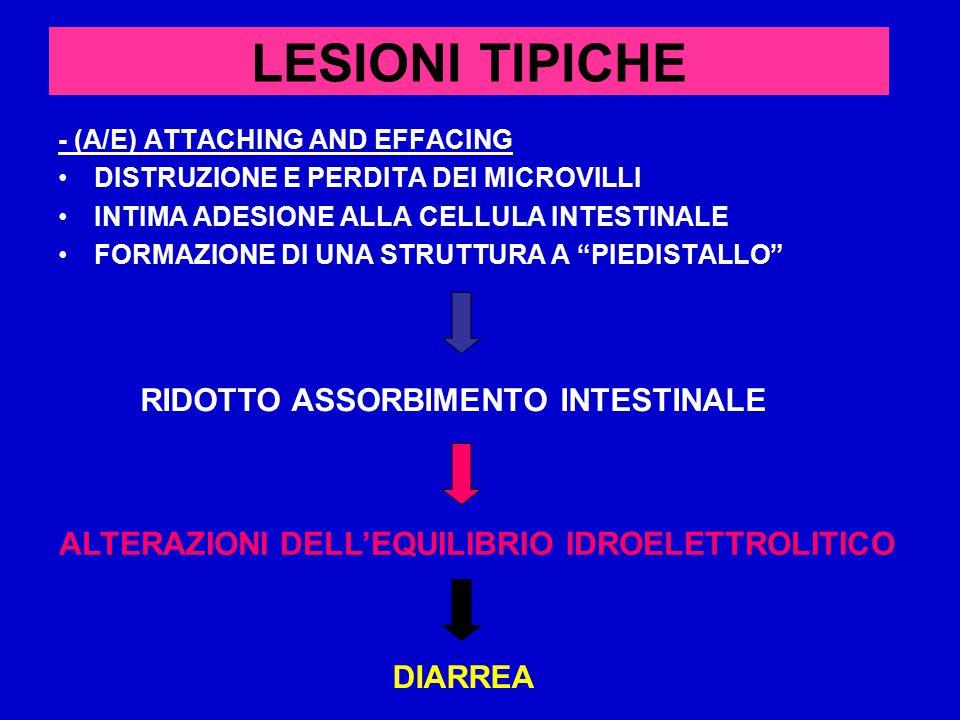 LESIONI TIPICHE RIDOTTO ASSORBIMENTO INTESTINALE