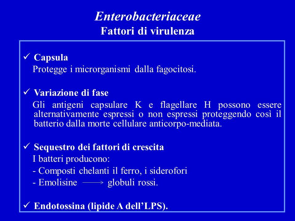 Enterobacteriaceae Fattori di virulenza