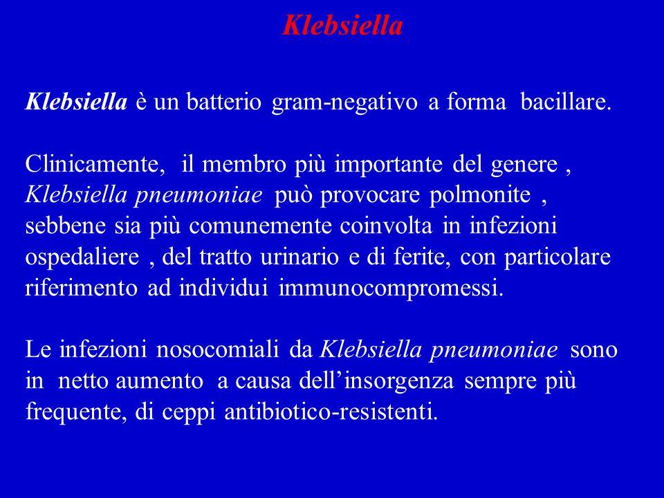 Klebsiella Klebsiella è un batterio gram-negativo a forma bacillare.