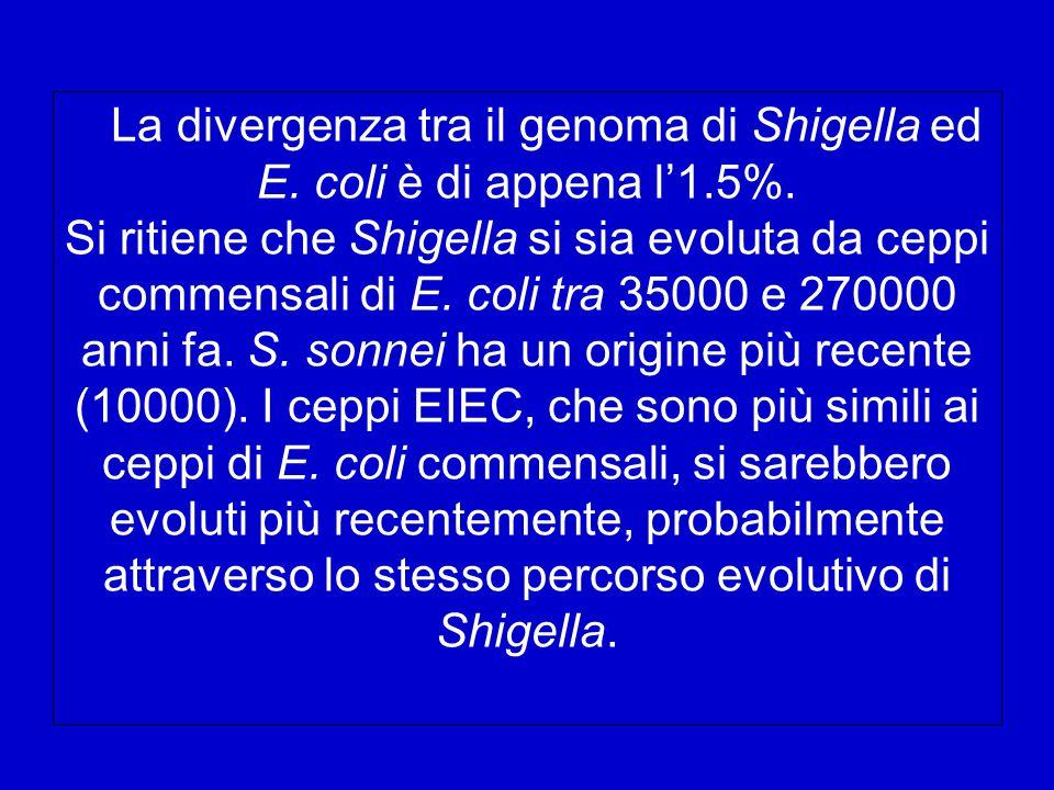 La divergenza tra il genoma di Shigella ed E. coli è di appena l'1. 5%