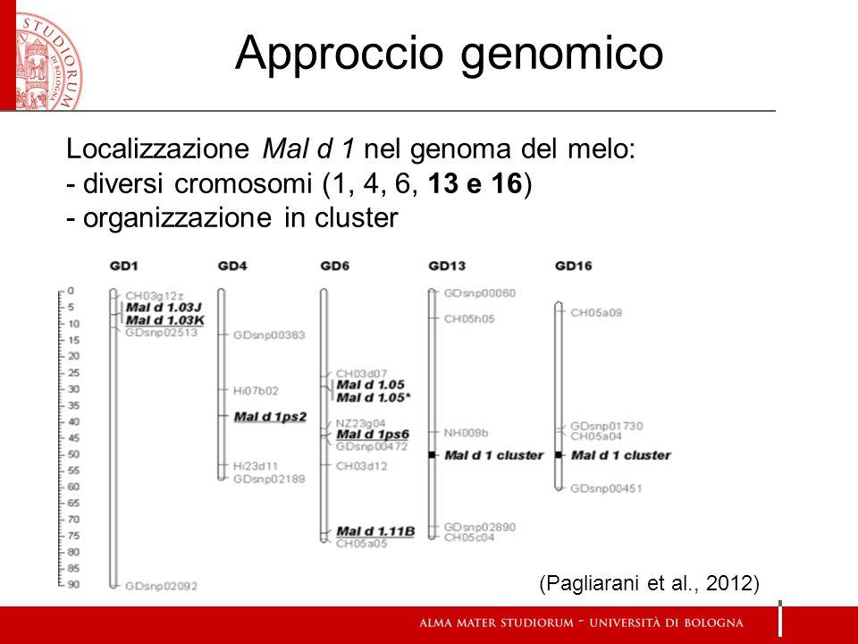 Approccio genomico Localizzazione Mal d 1 nel genoma del melo: