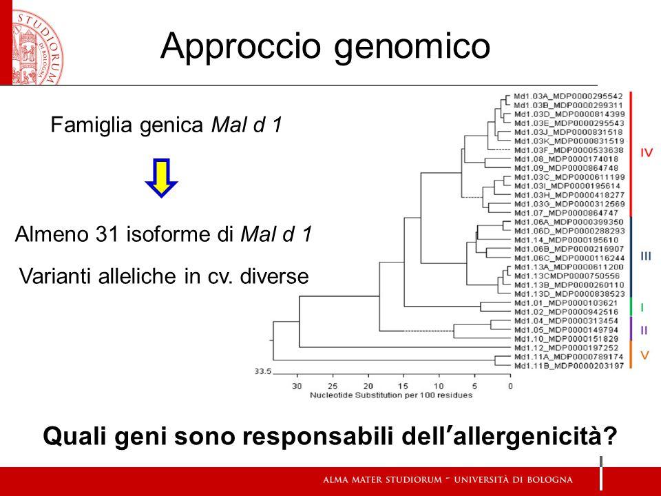 Quali geni sono responsabili dell'allergenicità