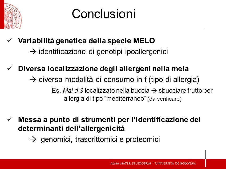 Conclusioni Variabilità genetica della specie MELO