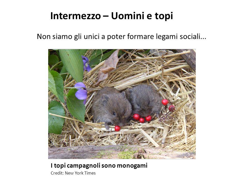 I topi campagnoli sono monogami