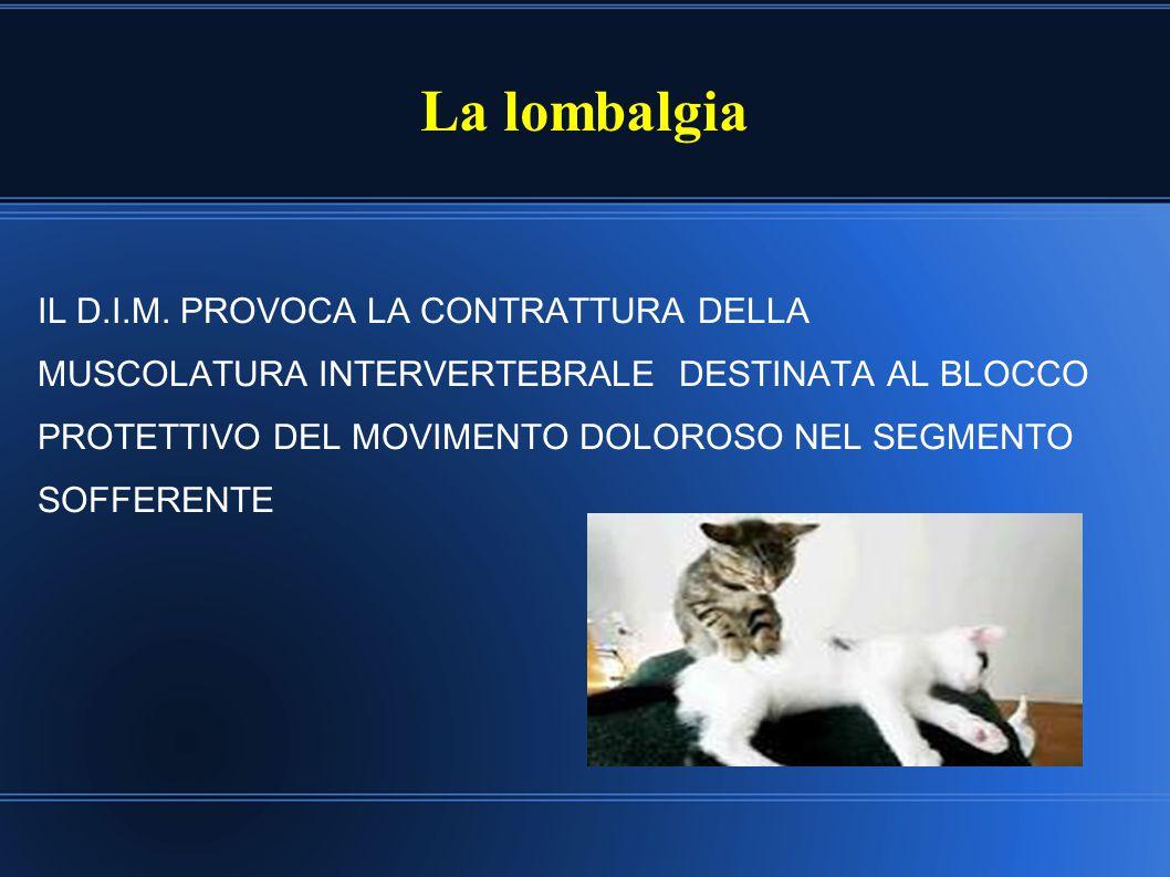 La lombalgia IL D.I.M. PROVOCA LA CONTRATTURA DELLA