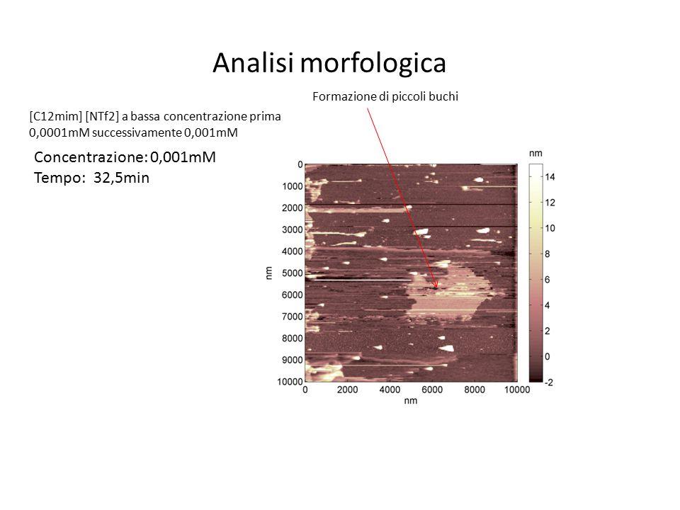 Analisi morfologica Concentrazione: 0,001mM Tempo: 32,5min