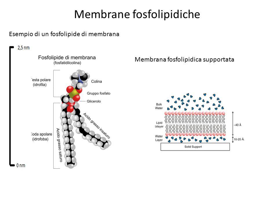 Membrane fosfolipidiche
