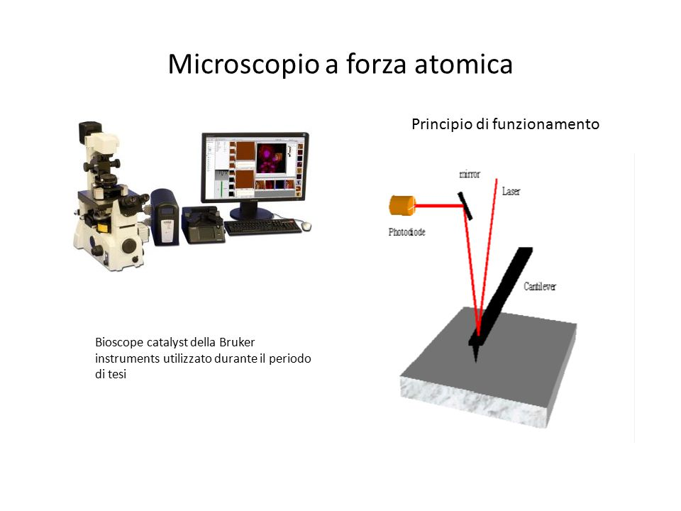 Microscopio a forza atomica