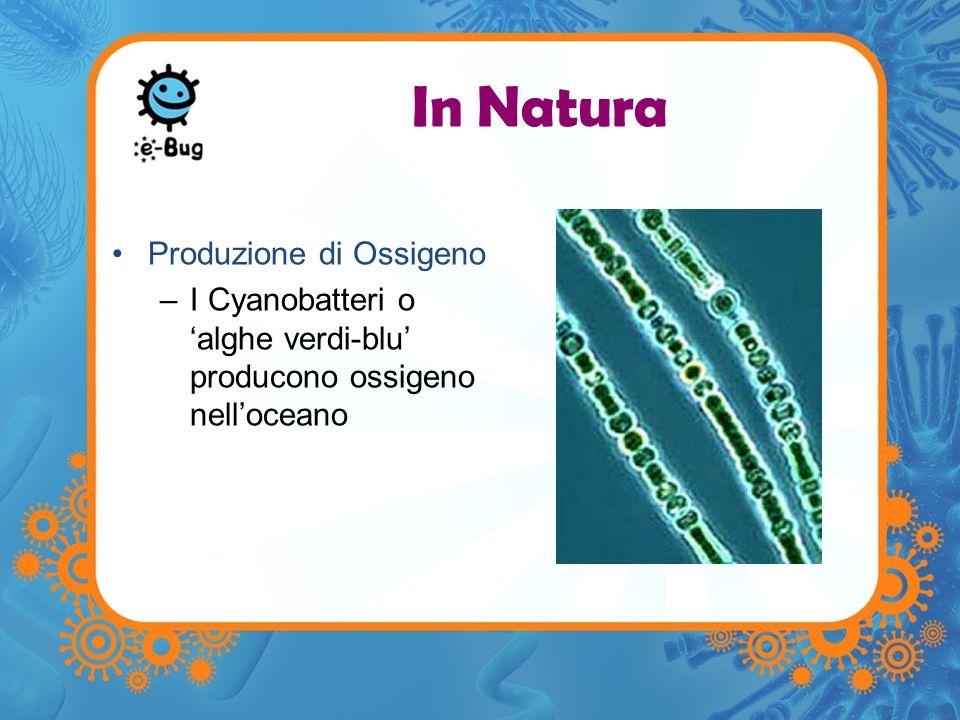 In Natura Produzione di Ossigeno