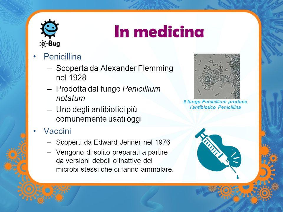 Il fungo Penicillium produce l'antibiotico Penicillina