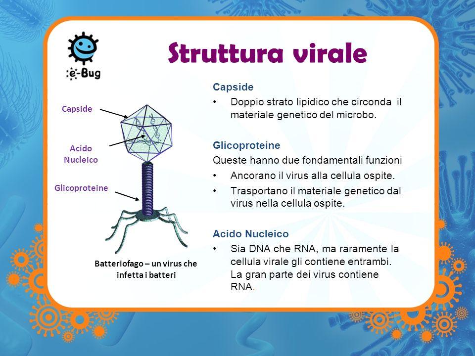 Batteriofago – un virus che infetta i batteri