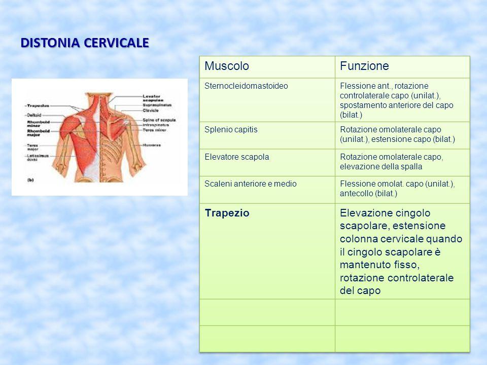 DISTONIA CERVICALE Muscolo Funzione Trapezio