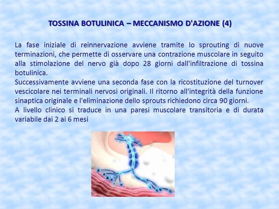 TOSSINA BOTULINICA – MECCANISMO D AZIONE (4)