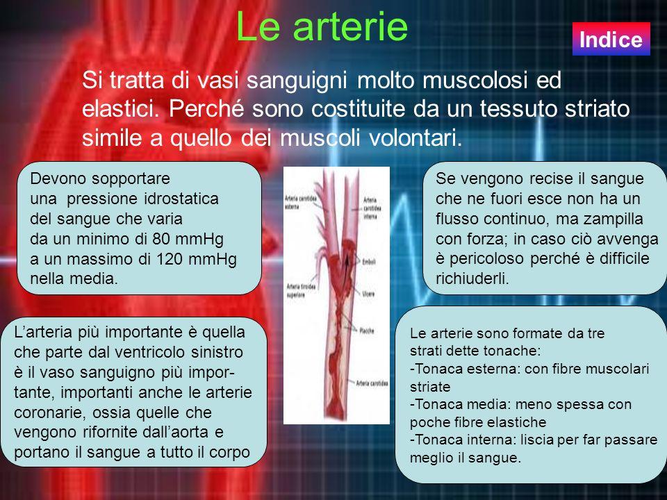 Le arterie Indice.