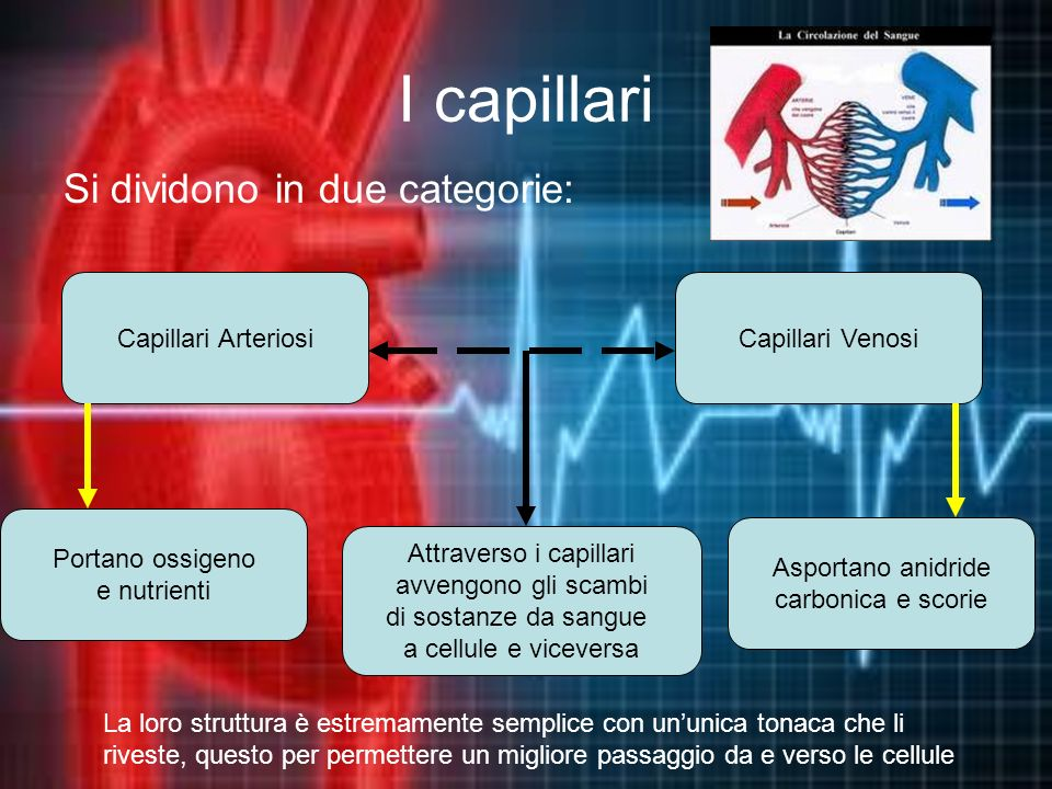Attraverso i capillari