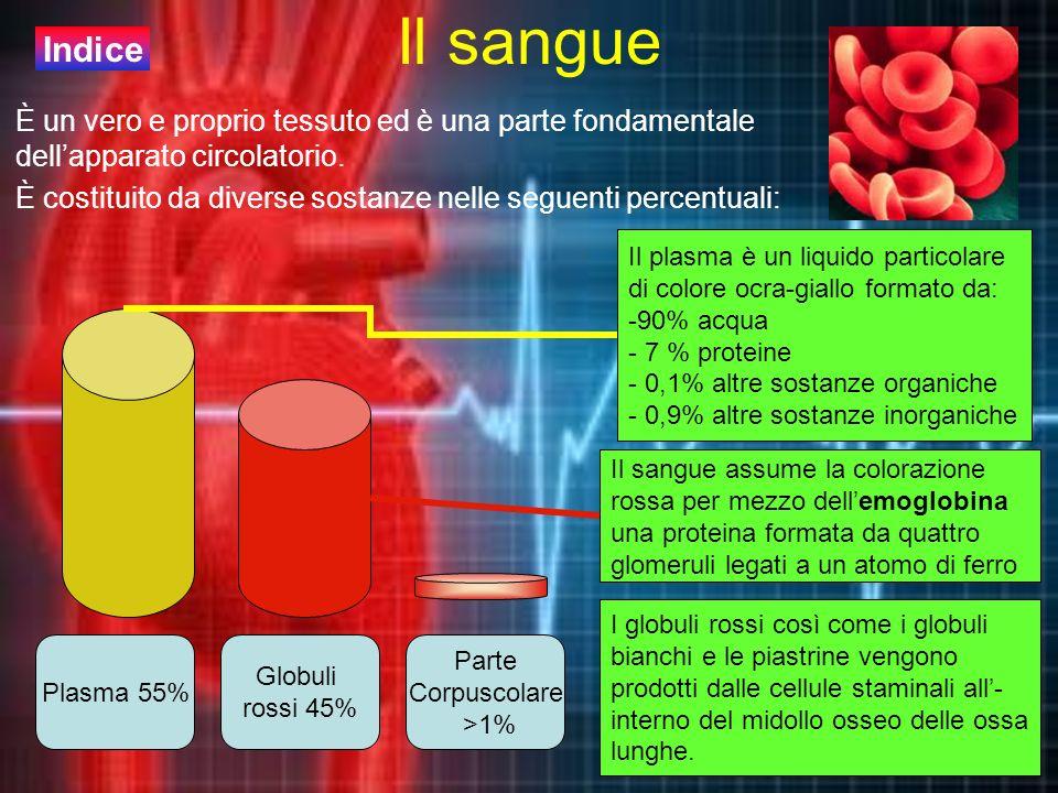 Il sangue Indice. È un vero e proprio tessuto ed è una parte fondamentale dell'apparato circolatorio.