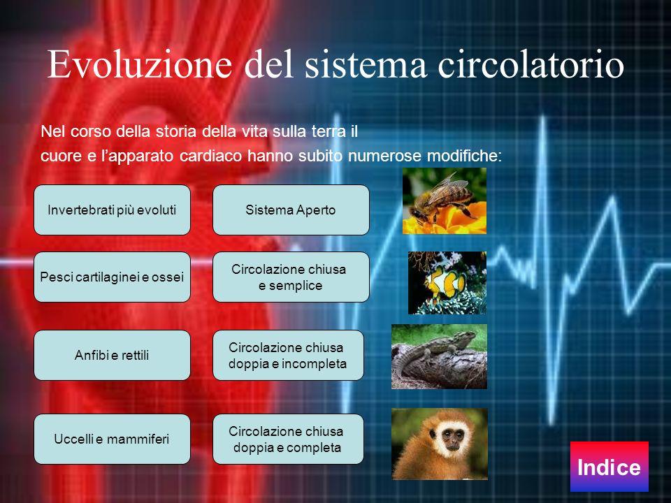 Evoluzione del sistema circolatorio