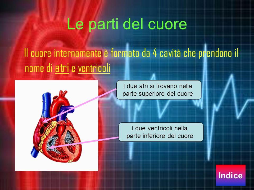 Le parti del cuore Il cuore internamente è formato da 4 cavità che prendono il nome di atri e ventricoli.