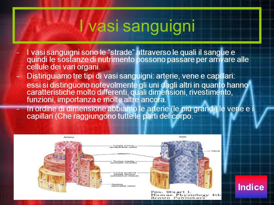 I vasi sanguigni Indice