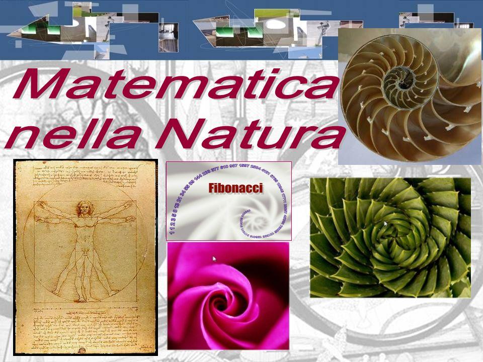 Matematica nella Natura
